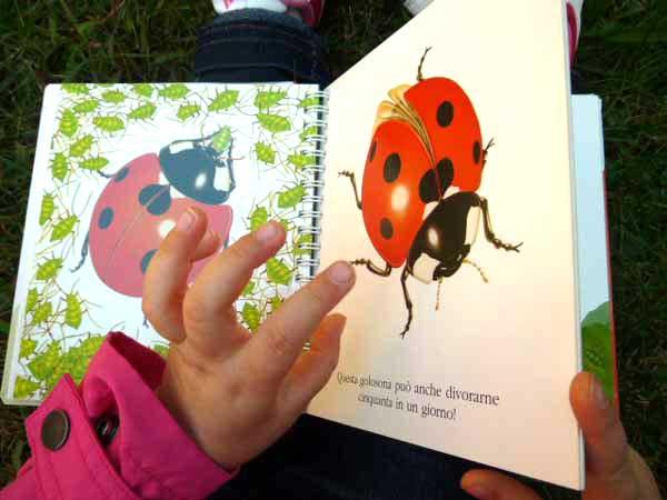 la coccinella un libro per bambini