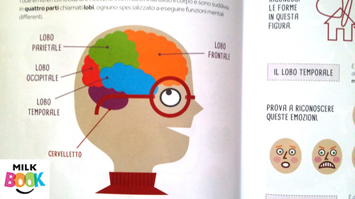 I lobi del cervello