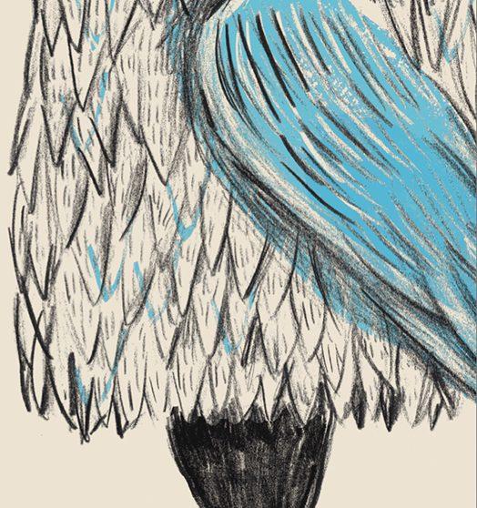 le piume blu