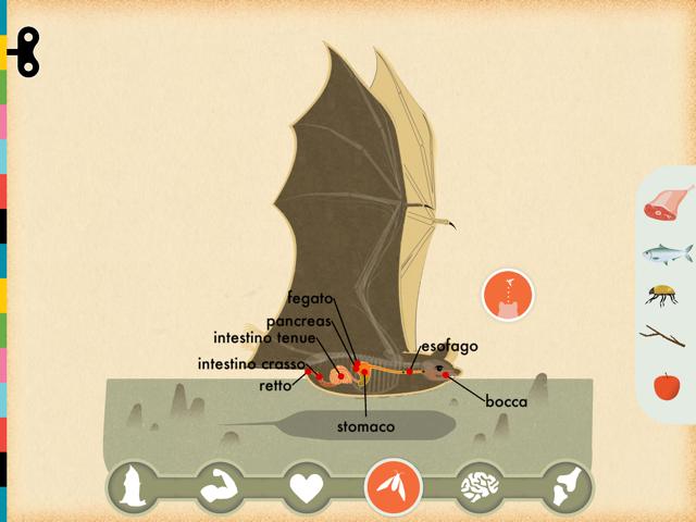 mammiferi pipistrello 2