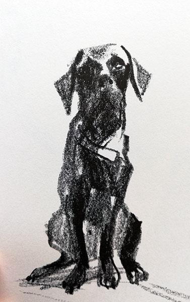 ritratto del cane River