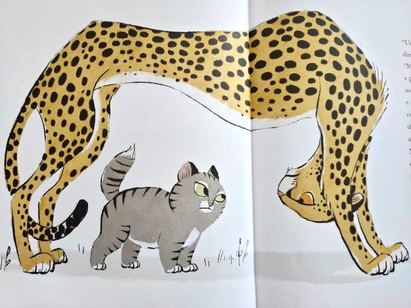 gatto e ghepardo